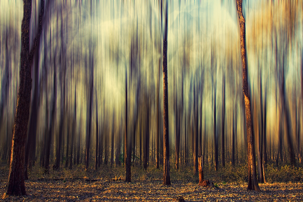"Vinoth Chandar, ""My Forest Dream is Still a Dream,"" Flickr."